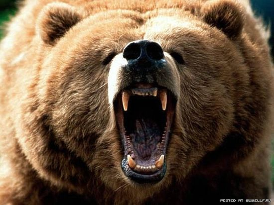 Медведи из кафе «Гоар» увезены хозяевам в неизвестном направлении