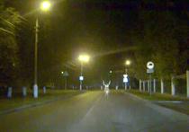 В больнице подмосковной Коломны поймали оленя