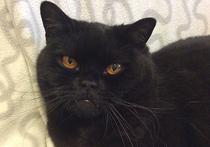 Московский кот «раскрыл» кражу золотого браслета, похищенного сорокой