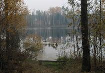 В лесах под Черноголовкой скрывается «летающая тарелка»